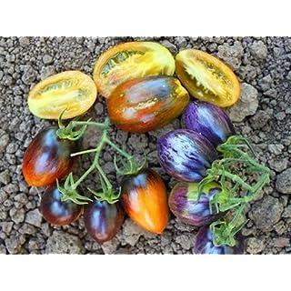 30 Brads Atomic Grape Tomate sät 2018 (alle Non-GMO Erbstück Gemüsesamen!)