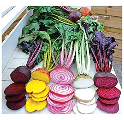 BEETROOT - RAINBOW MIX - 6 GRAM ~ APPROX 500 FINEST SEEDS : everything five pounds (or less!)