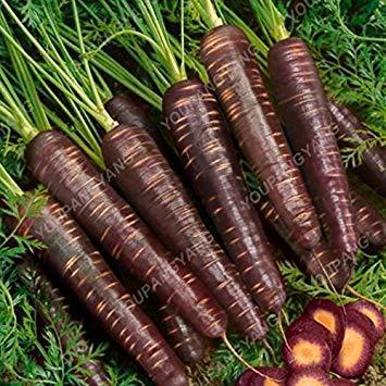 plat firm: 100 grammi/originestar stks cavolo, verdure in rapida crescita semi bonsai seeds il giardino domestico