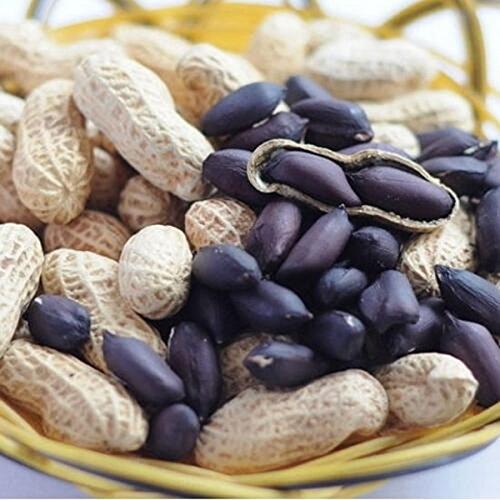 EgBert 10Pcs/Pack Nero Arachidi Semi Frutta Biologica Verdura Casa Fai da Te Snack Piante Semi