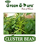 Green & Pure - High Yield Organic Vegetable Seeds - Cluster Bean (Pack of 1) for Kitchen / Terrace / Home Garden