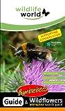 Wildlife World Mélange de graines de 10 fleurs sauvages pour bourdons