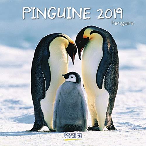 Pinguine (BK) 225319 2019: Broschürenkalender mit Ferienterminen. Lustige Bilder der Eis-vögel. 30 x 30 cm