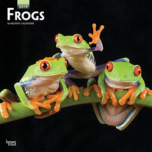 Frogs - Frösche 2019 - 18-Monatskalender (Wall-Kalender)