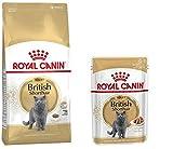 1x Royal Canin British Shorthair 400g 4x Royal Canin British Shorthair Frischebeutel 85 g