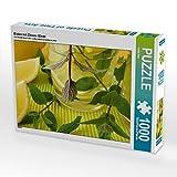 Eistee mit Zitrone Minze 1000 Teile Puzzle quer (CALVENDO Lifestyle)