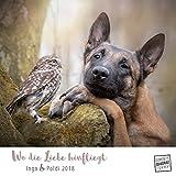 Wo die Liebe hinfliegt 2018 - Ingo & Poldi - Freundschaft von Schäferhund und Steinkauz - Wandkalender mit Spiralbindung - DuMont Quadratformat 24 x 24 cm -