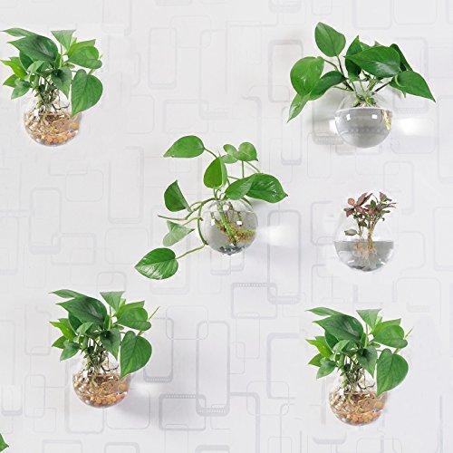 Beau Garden Pflanzengefäße zur Wandmontage, rund, Glas, zum Aufhängen, Blumentöpfe, Terrarien, 6 Stück