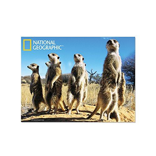 National Geographic NG18710 Meerkats Super 3D - Postal Coleccionable