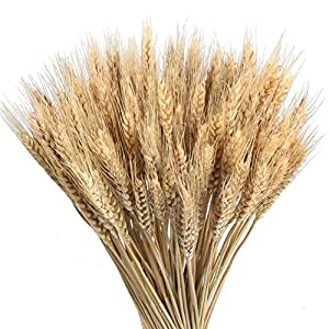 100 piezas de oro secas de trigo natural flores secas en casa de bricolaje mesa de cocina centros de mesa decorativos de la boda