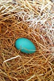 Journal Single Robin's Egg Bird Nest paperback contains alternating blank pages and lined pages. This allows you the freedom to express yourself with words or images.  Blank pages also provide the option to paste pictures or clippings like a scrapboo...