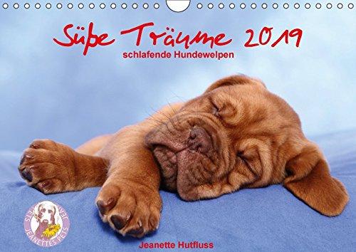 (Süße Träume 2019 - schlafende Hundewelpen (Wandkalender 2019 DIN A4 quer): träumen Sie mit... (Monatskalender, 14 Seiten ) (CALVENDO Tiere))