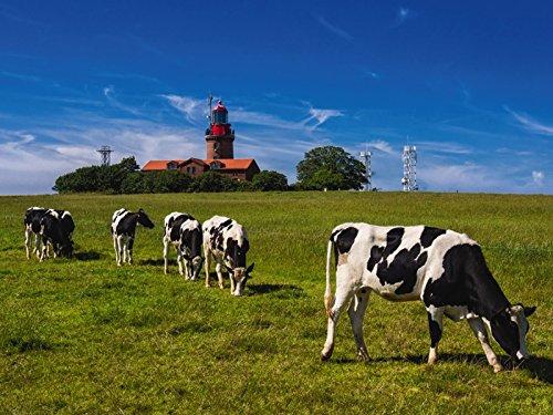 Artland Wandbilder selbstklebend aus Vliesstoff oder Vinyl-Folie Rico Ködder Der Leuchtturm von Bastorf Tiere Haustiere Kuh Fotografie Grün D1OS