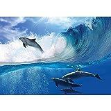 Vlies Fototapete 400x280 cm PREMIUM PLUS Wand Foto Tapete Wand Bild Vliestapete - Meer Tapete Delfin Meer Welle Tropfen Sonne Wasser blau - no. 531