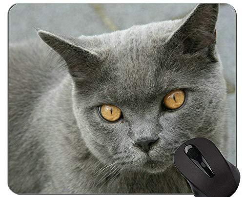 Mauspads, Orientalisch Kurzhaar Katze Benutzerdefinierte Original Mauspad, Britisch Kurzhaar Mauspad mit genähtem Rand