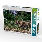 Jaguar 1000 Teile Puzzle quer: Brasilien - das Pantanal (CALVENDO Orte)