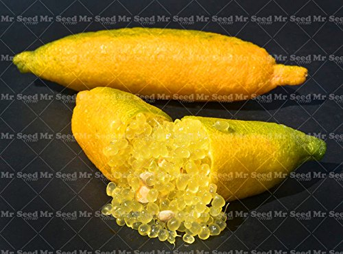 50Pcs Tropical Fruit Graines Finger Limes Citrus graines pour le jardin Balcon rares plantes Bonsai arbres fruitiers Graines Fruit Goût Spécial 3