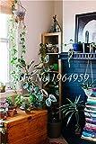 Pinkdose 200 pedazos de la venta Raras Zanahoria & # 39; púrpura Sun & # 39; Híbrido F1 vegetal del Jardín perenne Flores para el jardín a Dar Inicio Alimentos