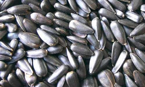 Versele-laga - Graines de tournesol noir pour mésanges, oiseaux sauvages