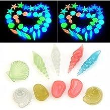 10 piedras de colores brillantes en la oscuridad, conchas de mar, estrella de mar
