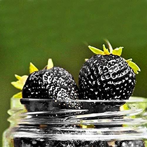 Erdbeeren Pflanzen -