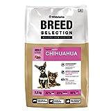 Wildsterne Chihuahua 2,5 kg