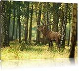 Hirsch im Wald Bild auf Leinwand, XXL riesige Bilder fertig gerahmt mit Keilrahmen, Kunstdruck auf Wandbild mit Rahmen, guenstiger als Gemaelde oder Bild, kein Poster oder Plakat, Format:80x60 cm