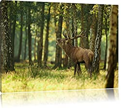 Hirsch im Wald Bild auf Leinwand, XXL riesige Bilder fertig gerahmt mit Keilrahmen, Kunstdruck auf Wandbild mit Rahmen, guenstiger als Gemaelde oder Bild, kein Poster oder Plakat, Format:120x80 cm