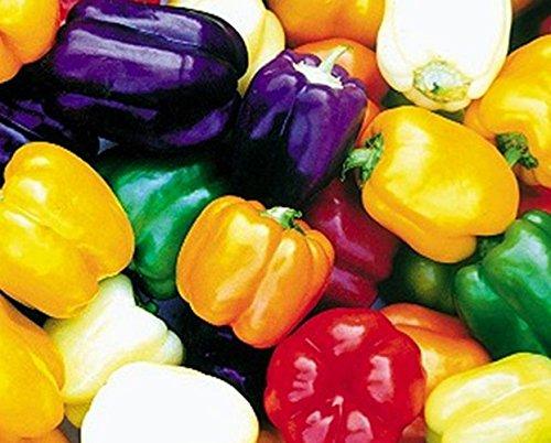 Samenmix - Block Paprika süß - weiß, gelb, orange, rot, purple - Capsicum annuum - 5 Sorten - 20 Samen