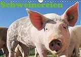 Schweinereien (Wandkalender 2019 DIN A4 quer): Ein schöner Kalender für alle die Schweine und Schweinereien lieben (Monatskalender, 14 Seiten ) (CALVENDO Tiere)