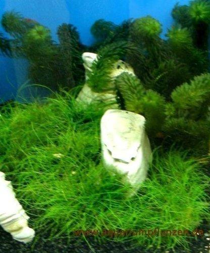 nano-9-agua-fria-plantas-set-nano-acuario-30l