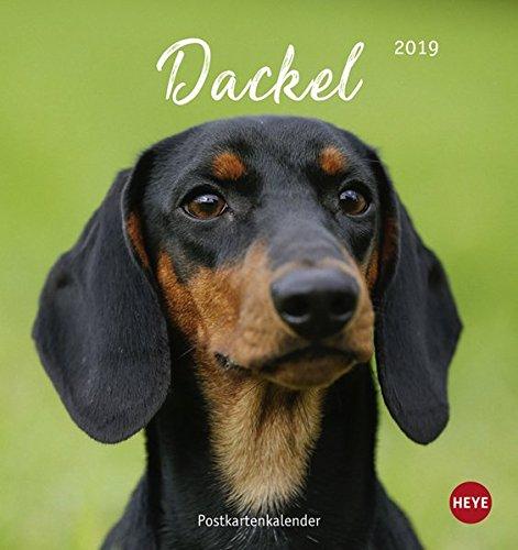 Dackel 2019 Postkartenkalender
