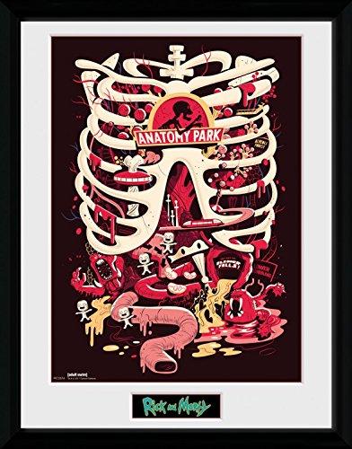 Rick Y Morty - Parque Anatómico Póster De Colección Enmarcado (40 x