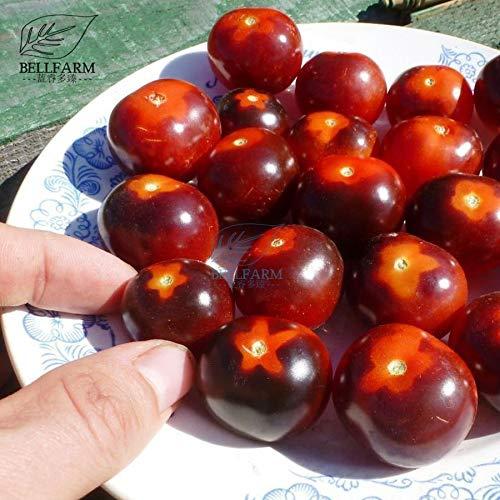 Pinkdose BELLFARM Bonsai 'Bing Wing' Collection Orange Brown Cherry Tomate Heirloom Bonsai Tomate High Yield High Yield High Keimung 100 Stück/Pack - Cherry-tomaten Orange