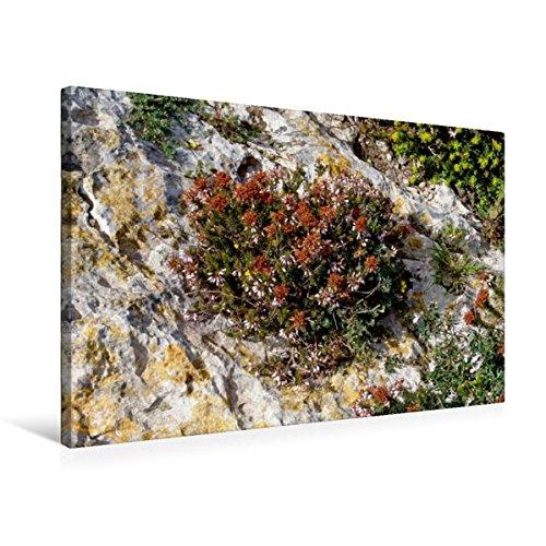 Preisvergleich Produktbild Premium Textil-Leinwand 75 cm x 50 cm quer, Flora der Küste Maltas | Wandbild, Bild auf Keilrahmen, Fertigbild auf echter Leinwand, Leinwanddruck (CALVENDO Orte)