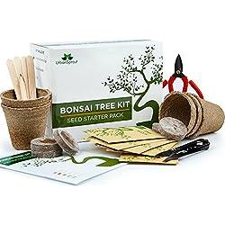 Urban Sprout Bonsai Samen Anzuchtset - Züchten Sie Ihren eigenen Bonsaibaum mit Hilfe von Samen – Das Geschenkset beinhaltet 5 Baumvarianten zur Aufzucht drinnen – Mit Bonsai Schere