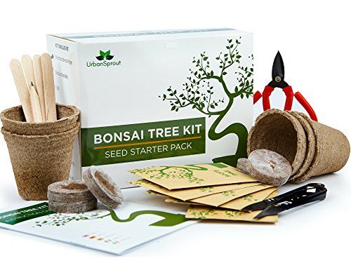 Urban Sprout Kit de Bonsai – Cultive Sus Propios Bonsáis con Semillas...