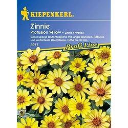 Sperli Blumensamen Zinnien Profusion Yellow, grün
