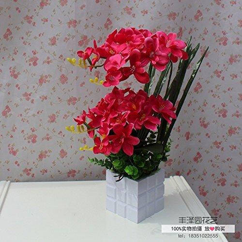 Schmetterlingsorchidee Seba5 Home