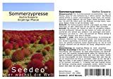 Seedeo® Sommerzypresse (Kochia Scoparia) 200 Samen