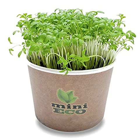 Garden Cress Microgreen Grow Kit. Approximately 2000 seeds. Organic Seeds