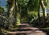 1art1 78157 Bäume - Kleine Allee Fototapete Poster-Tapete 360 x 254 cm