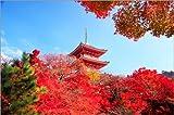 Posterlounge Holzbild 120 x 80 cm: Herbst in Kyoto von Shin Terada/Danita Delimont