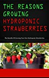 The Reasons Growing Hydroponic Strawberries: The Benefits Of Growing Your Own Hydroponic Strawberries