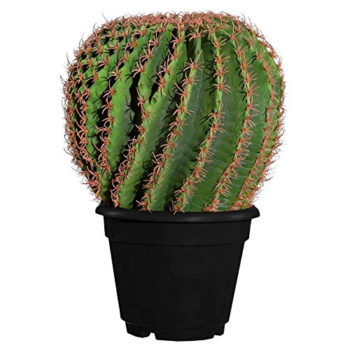 Pflanzen-Kölle Künstlicher Kugelkaktus, Echinokaktus, 33 x 20 cm, Kunststofftopf 18 cm