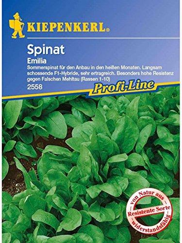 Spinat Emilia F1 Sommerspinat resistent (C Und Spinat)