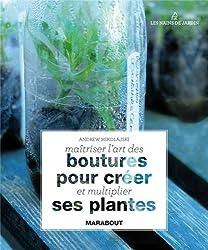 Maitriser l'art des boutures pour créer ses plantes