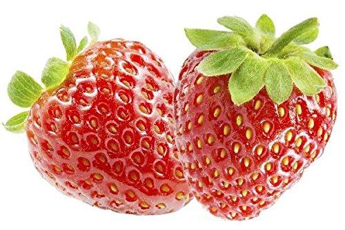 2 Pflanzen Erdbeere Ostara - Fragaria Ostara - zweimaltragend - Topfgewachsen