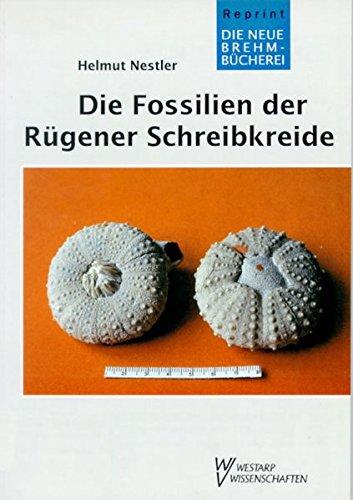 FOSSILIEN D. RÜGENER ... SCHREIBKREIDE