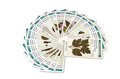 arbocartes-jeu-de-reconnaissance-des-arbres-coniferes-et-arbustes-dornement